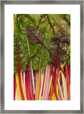 Colorful Rainbow Swiss Chard Calgary Framed Print by Michael Interisano