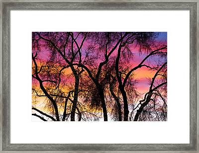 Colorful Silhouetted Trees 27 Framed Print by James BO  Insogna
