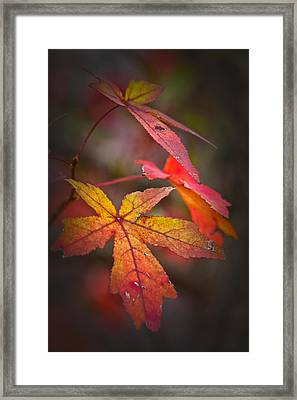 Colors Framed Print by Karol Livote