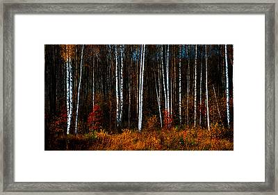 Colors Of Fall Framed Print by Jenny Rainbow