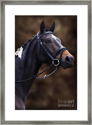 Coloured Show Horse Framed Print by Ethiriel  Photography