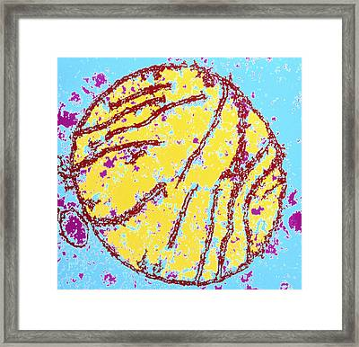Coloured Tem Of A Mammal Mitochondrion Framed Print by Dr Gopal Murti