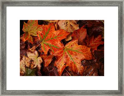 Complementary Contrast Leaves Framed Print by Matthew Green