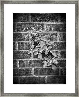 Concrete And Trees  Framed Print by JC Photography and Art