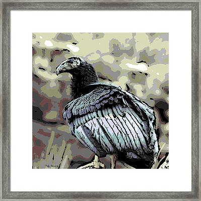 Condor Profile Framed Print by George Pedro