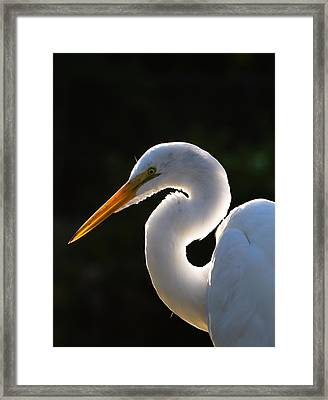 Contemplative Egret Framed Print by Andres Leon