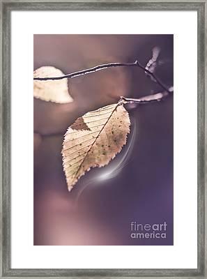 Contre Jour Framed Print by VIAINA Visual Artist