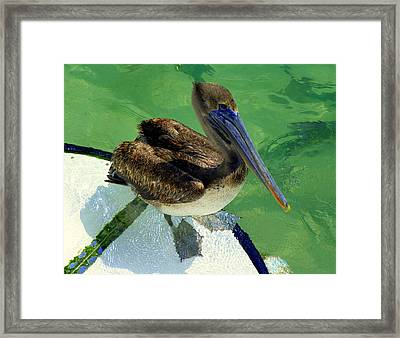 Cool Footed Pelican Framed Print by Karen Wiles