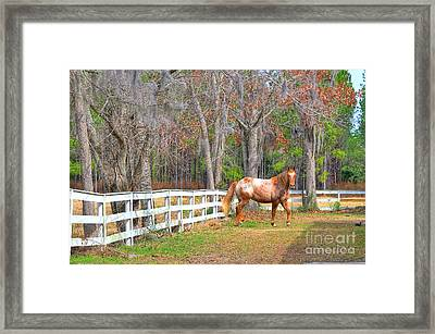 Coosaw - Outside The Fence Framed Print by Scott Hansen