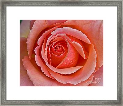 Coral Bloom Framed Print by Chuck Flewelling