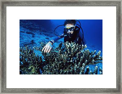 Coral Research Framed Print by Alexis Rosenfeld