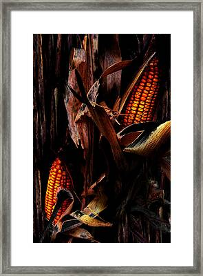 Corn Stalks Framed Print by Rachel Christine Nowicki