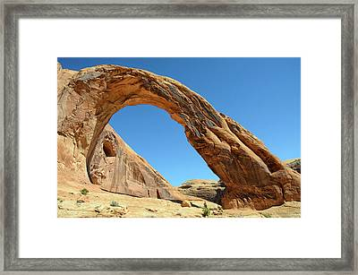 Corona Arch Framed Print by Julie Rideout