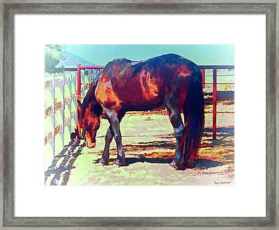 Corraled Horse Framed Print by Jerry L Barrett