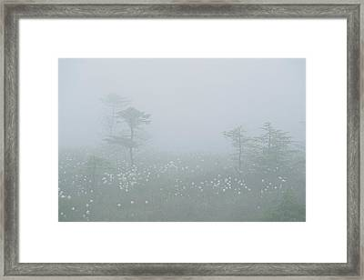 Cotton Grass Swamp And Spruce Trees Framed Print by Norbert Rosing