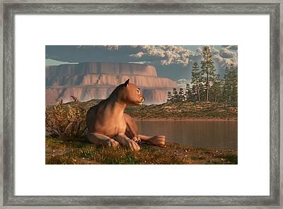 Cougar At Evening Framed Print by Daniel Eskridge