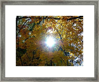 Country Color 3 Framed Print by Will Borden