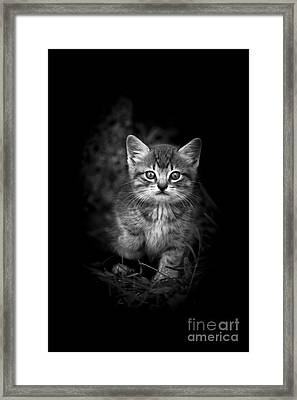 Courageous Framed Print by Kim Henderson