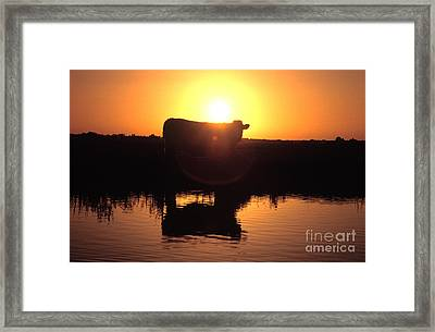 Cow At Sundown Framed Print by Picture Partners and Photo Researchers