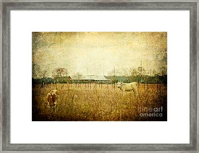 Cow Pasture Framed Print by Joan McCool