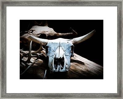 Cow Skull In Shade Framed Print by Sonja Quintero