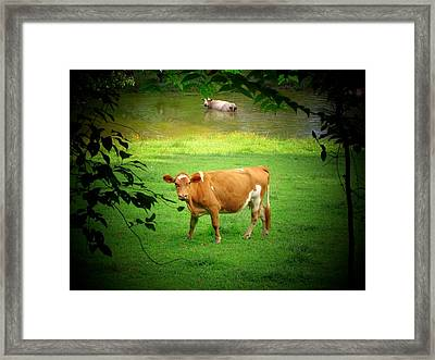 Cows Framed Print by Michael L Kimble