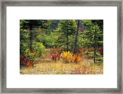 Cranberry Glades Autumn Framed Print by Thomas R Fletcher