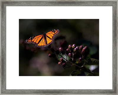 Crape Myrtle Landing Framed Print by DigiArt Diaries by Vicky B Fuller