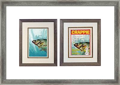 Crappie And Minnows Framed Print by JQ Licensing