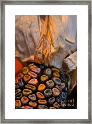 Crazee Corn Colors Framed Print by Susan Herber