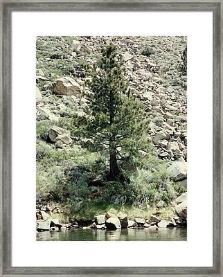 Creek Tree Framed Print by Karen Chappell