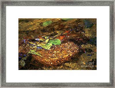 Creekside Framed Print by Sharon Talson