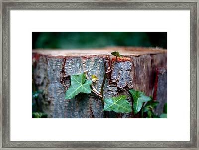 Creeping Plant On Bole Framed Print by Marcio Faustino