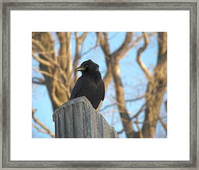 Crow In Wind Framed Print by Gothicolors Donna
