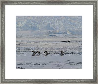 Crowded Shore Framed Print by Tony Beck