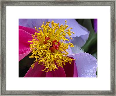 Crown Of Gold Framed Print by Sean Griffin