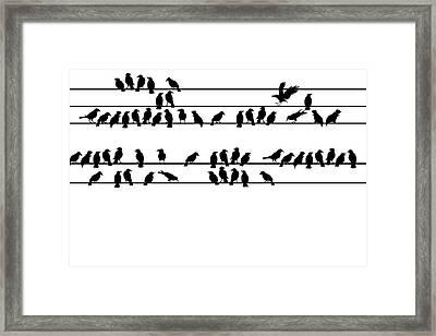 Crows Framed Print by Allen Klein