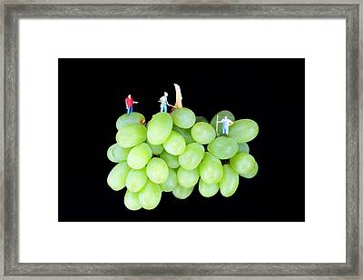 Cultivation On Grapes Framed Print by Paul Ge