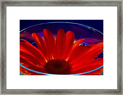 Cup O Gerber Framed Print by Mitch Shindelbower