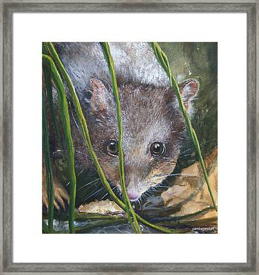 Curious - Northern Quoll Framed Print by Jan Lowe