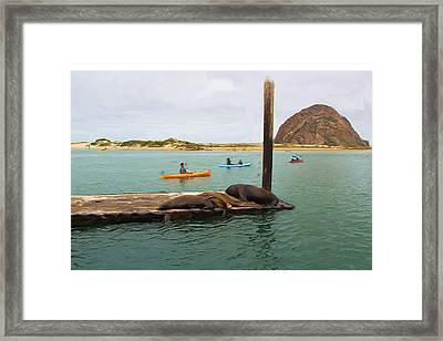 Curious About Sea Lions Framed Print by Heidi Smith