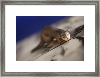 Curious Framed Print by Greg Kopriva