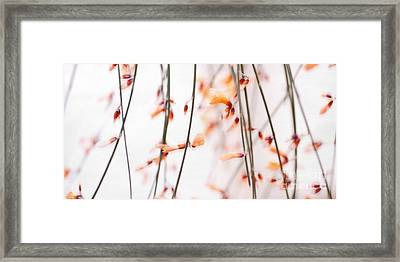 Curtain Framed Print by Priska Wettstein