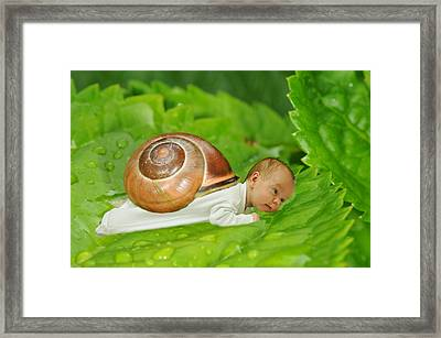 Cute Baby Boy With A Snail Shell Framed Print by Jaroslaw Grudzinski