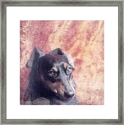 Cute Daschund Framed Print by Angel  Tarantella
