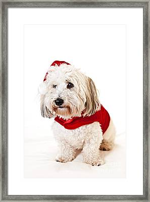 Cute Dog In Santa Outfit Framed Print by Elena Elisseeva