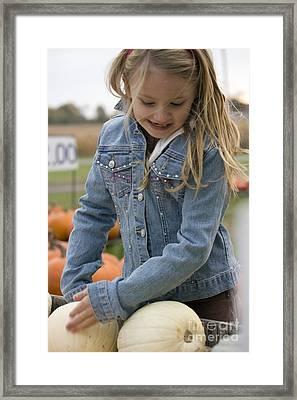 Cute Little Girl Picking A Pumpkin Framed Print by Christopher Purcell