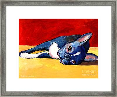 Cute Sleepy Boston Terrier Dog Painting Print Framed Print by Svetlana Novikova