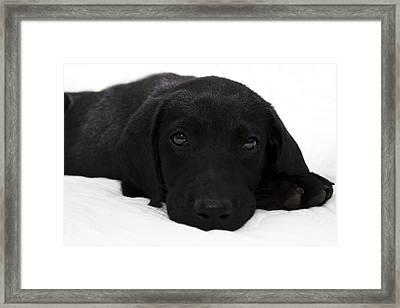 Cuteness Framed Print by Ricky Barnard