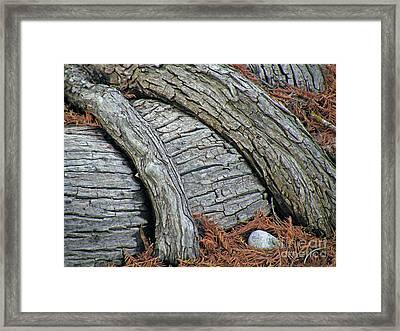 Cypress Overpass Framed Print by Joe Jake Pratt